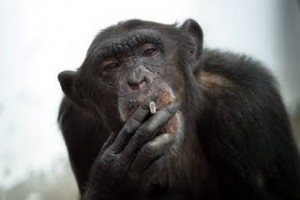 monkey_smoking_1a